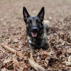 Yelp Review for Off Leash K9